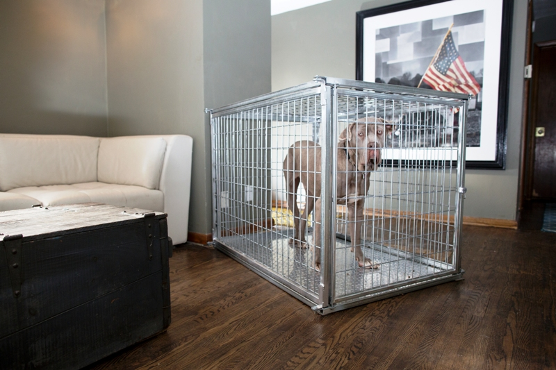 Extra Large Heavy Duty Dog Crate Collapsible Steel