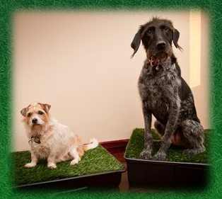 Potty Park product with Large and Small Dogs