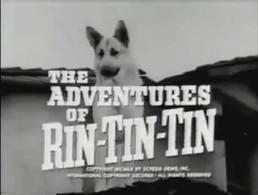 Rin Tin Tin