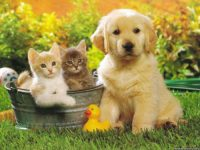 23 Curious Facts about Dogs and Cats