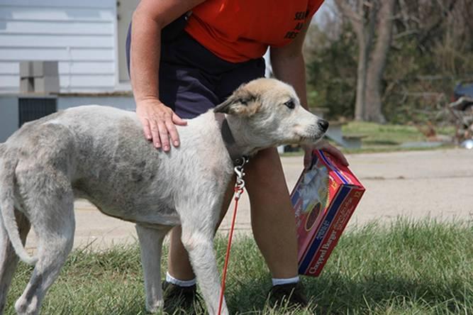 Dog from Joplin Tornado-survivor
