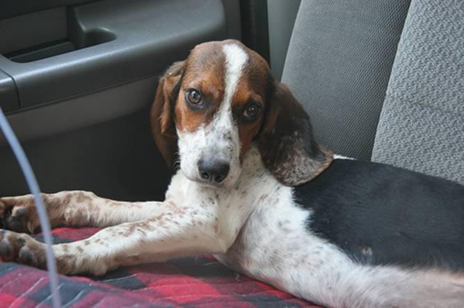 Little Lady in car from Joplin Tornado