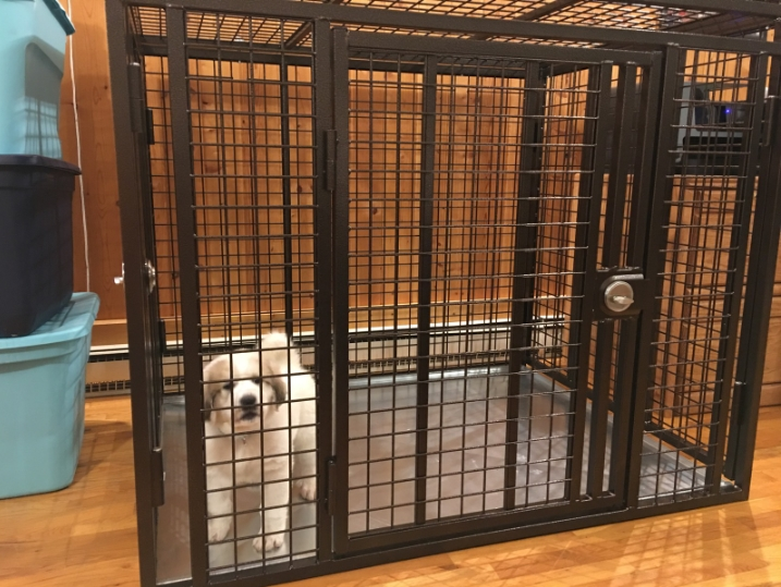 Our Strongest Heavy Duty Dog crate at CarryMyDog.com for your escape artist dog