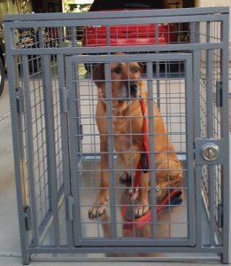 giant heavy duty dog crate escape proof u0026 from