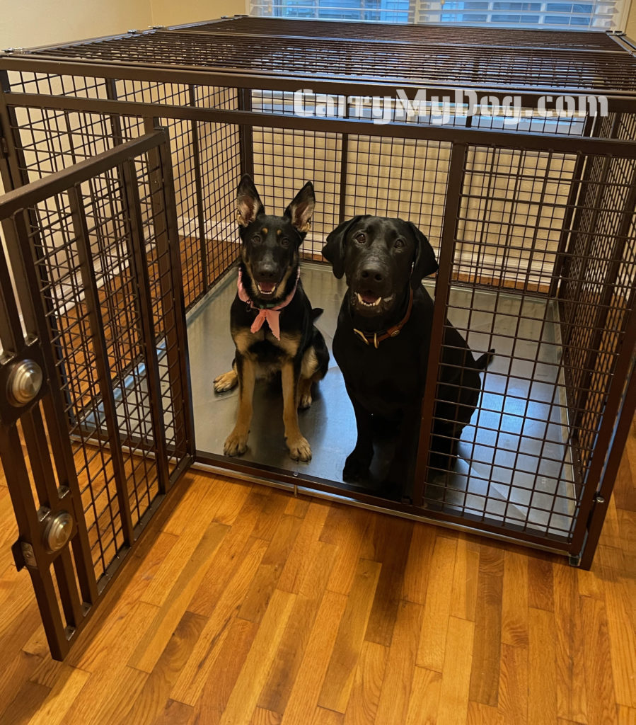 Riley and Luna in their all new strongest heavy duty dog crate by Xtreme dog crates from carrymydog.com