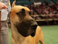 Animal Shelter   Perfection in an Imperfect World