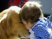 Dog Breeds Good Dogs Do Not Bite Children, or Do They?
