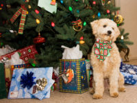Keep Your Pets Safe and Your Holidays Happy