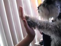 Teaching Your Dog To High-Five Couldn't be Easier