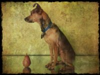 Little Dogs Laughed a Still Life