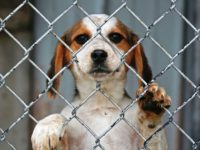Dogs from Rescues or Shelters Need Your Help