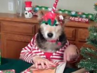 Funny Dog Video Christmas