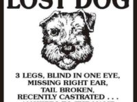 What Should You Do When Your Pet Is Lost