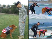 Surf Dog Ricochet surfs with Staff Sergeant Randall Dexter