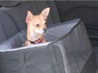 This Pet Car Seat is Best Car Seat for Travelers and Dog Lovers