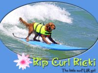 Surfing Dog Helps Raise Money for Disabled
