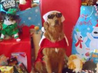 Surf dog Ricochet raises funds and awareness as Santa Paws