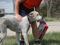 Joplin Tornado Casualties Dogs and Cats